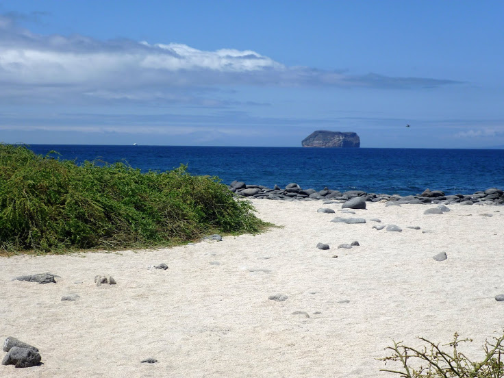 The_beach_at_North_Seymour_Island_in_the_Galapagos