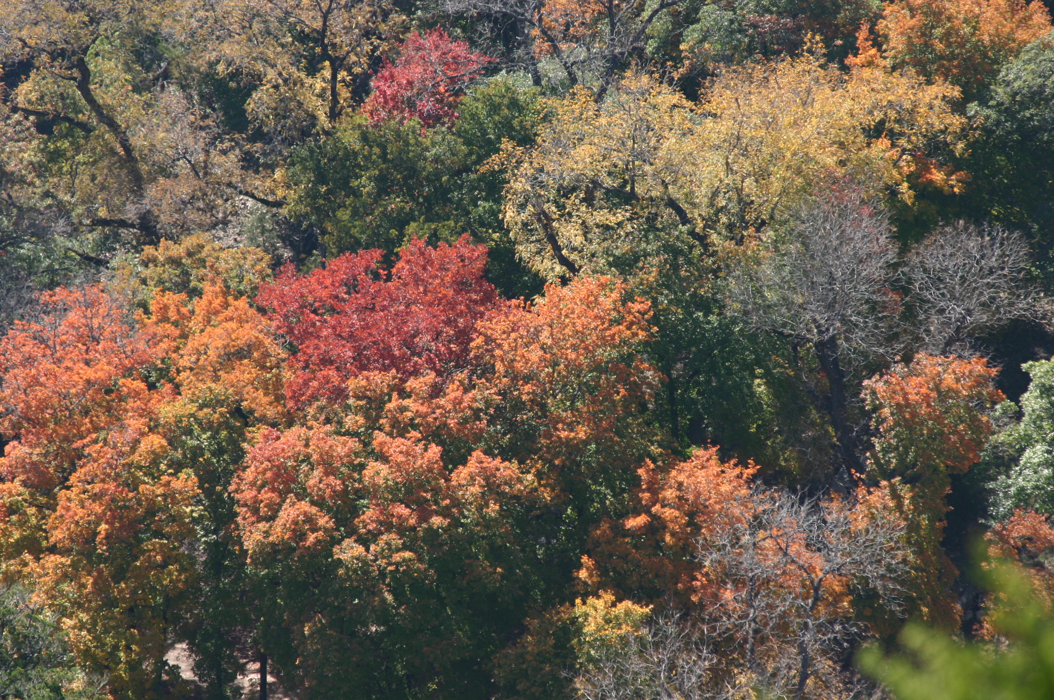 Aerial_View_of_Autumn_Forest_Colors