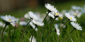 Denim Spirit: Death and Gratitude