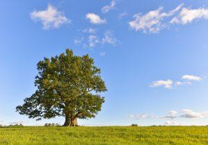 Denim Spirit 50: Befriending a Tree