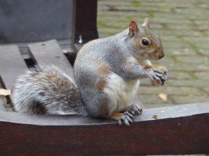 Squirrel Season